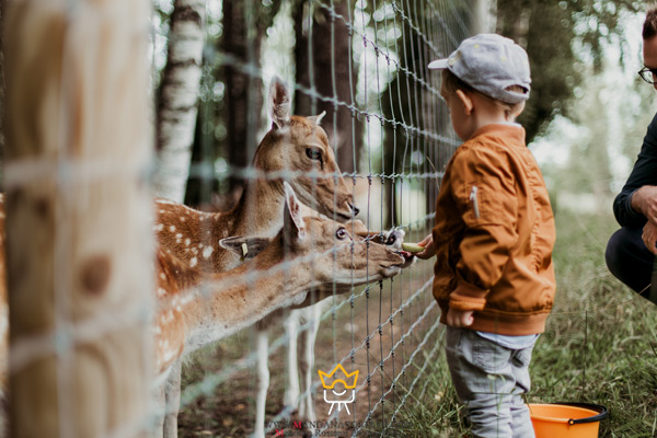 گرفتن عکس با حیوانات