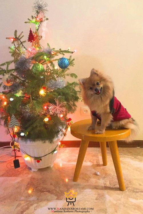 عکاسی از حیوانات در کریسمس